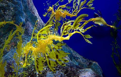 le camouflage dans le milieu marin    introduction